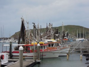 Coffs Harbour - Fishing Fleet